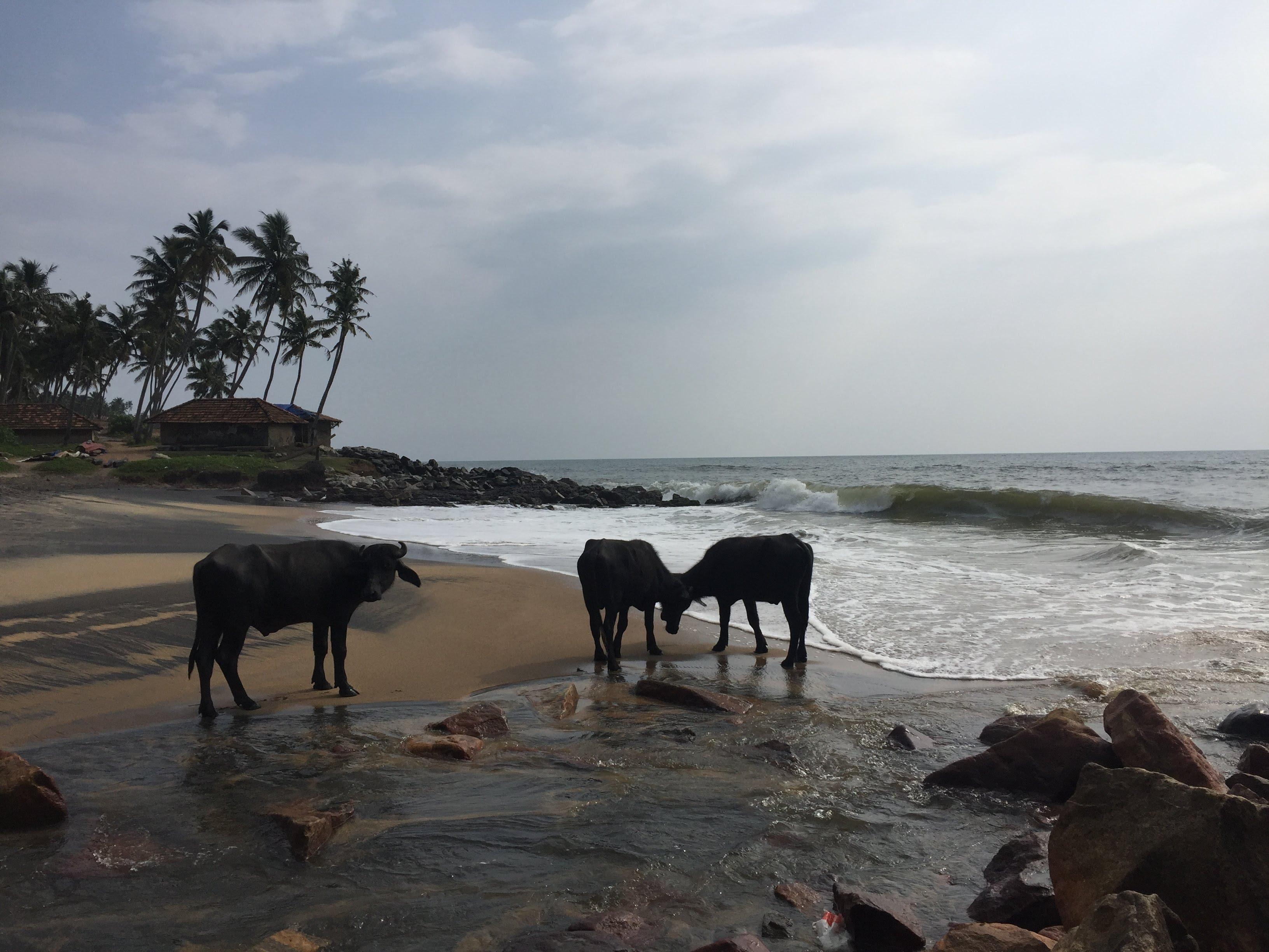 南インドのビーチ