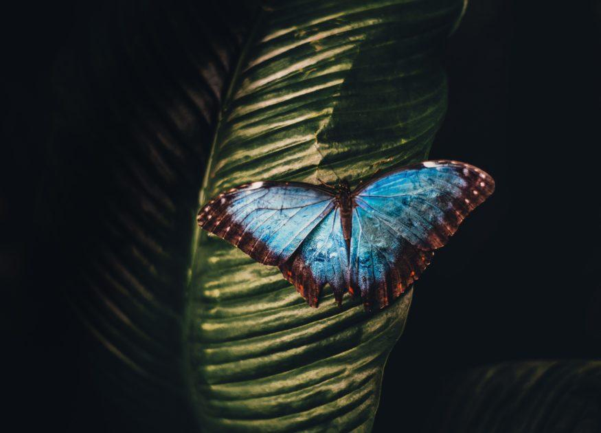 青い色のバタフライ