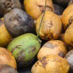 ドライココナッツ~チャンクやダイスが栄養価が高く安くておすすめ~