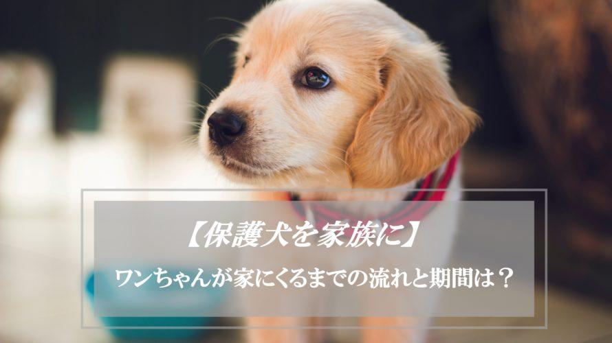 里親申請から引き取りまでの期間はどれくらい?保護犬の飼い主になるまでの流れ