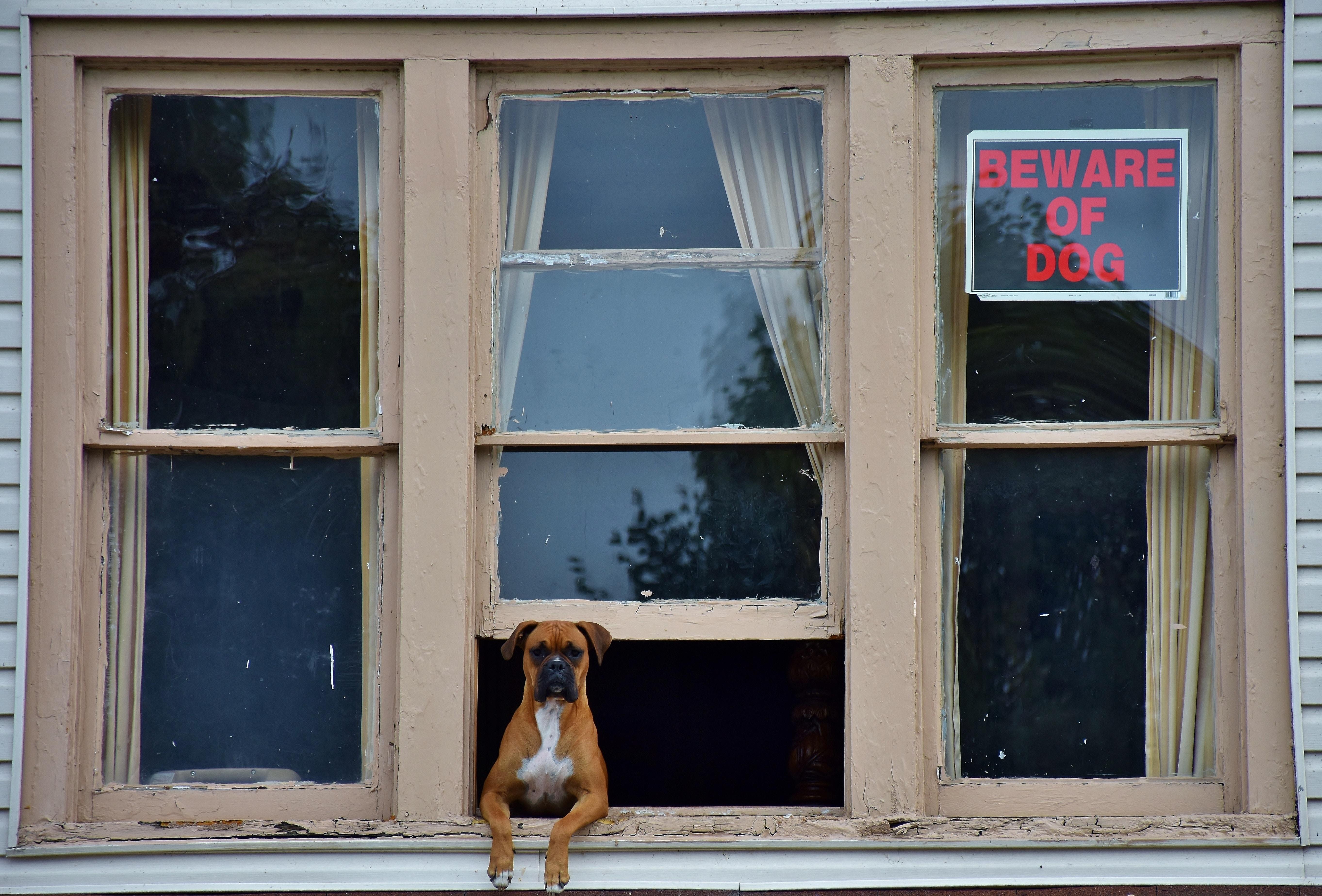 マンションの窓から外を見る犬