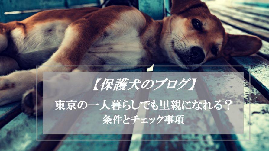 保護犬の里親は東京・一人暮らしでも可能?保護犬ちゃん飼い主のブログ