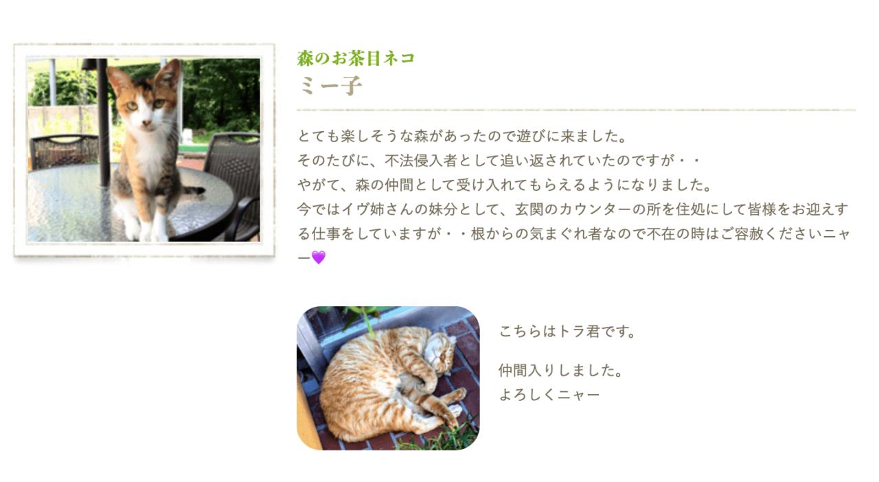 リフレッシュの森の看板猫