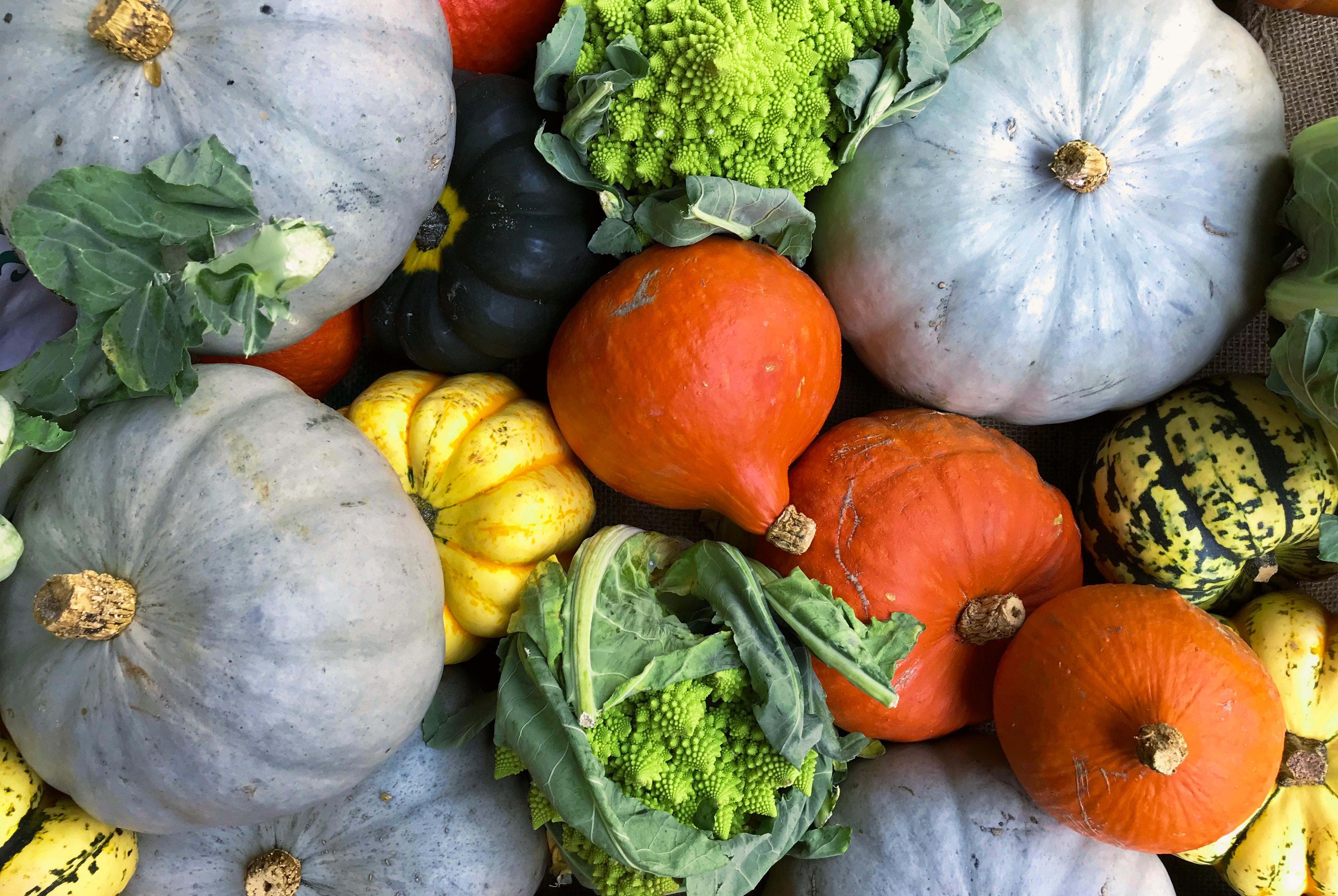 色鮮やかなカボチャや葉野菜