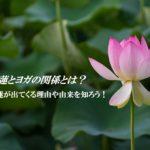 蓮の花とヨガの関係