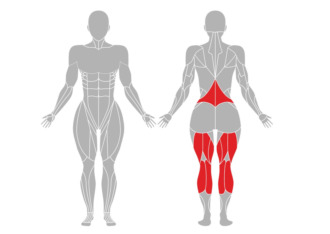 立位の前屈のポーズで効果が期待できる部位