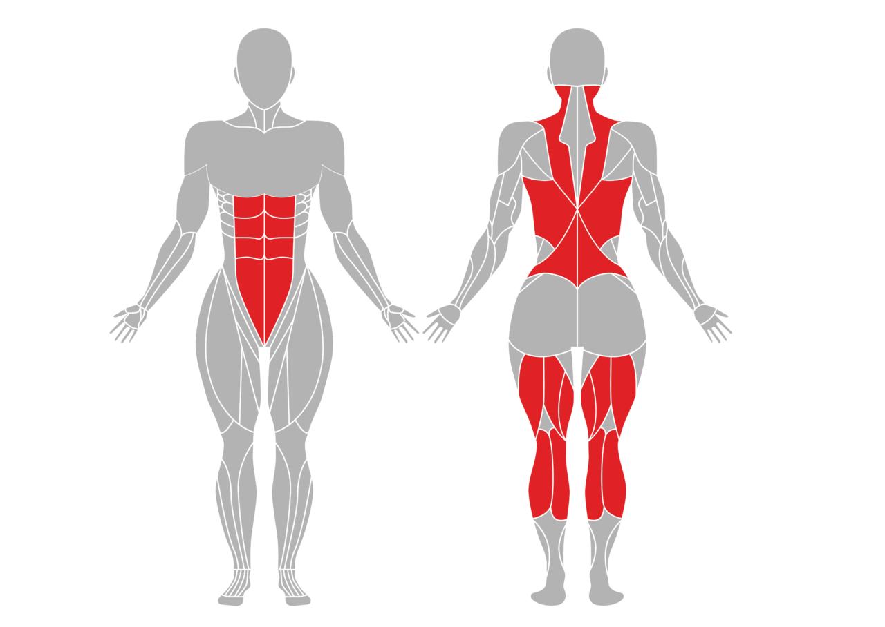 半分の前屈の効果のある身体部位