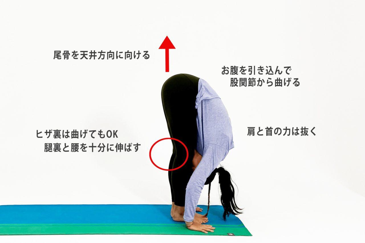 立位の前屈のポーズのコツとポイント