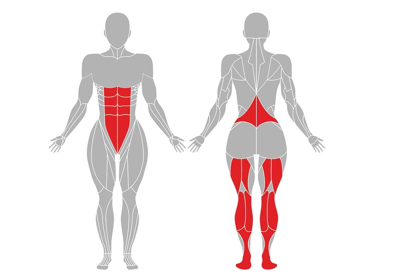 ヨガのダウンドッグのポーズで効果がある筋肉