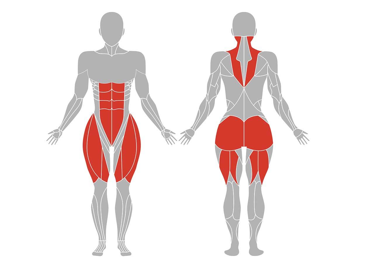椅子のポーズ(チェアポーズ)の効果が期待できる筋肉