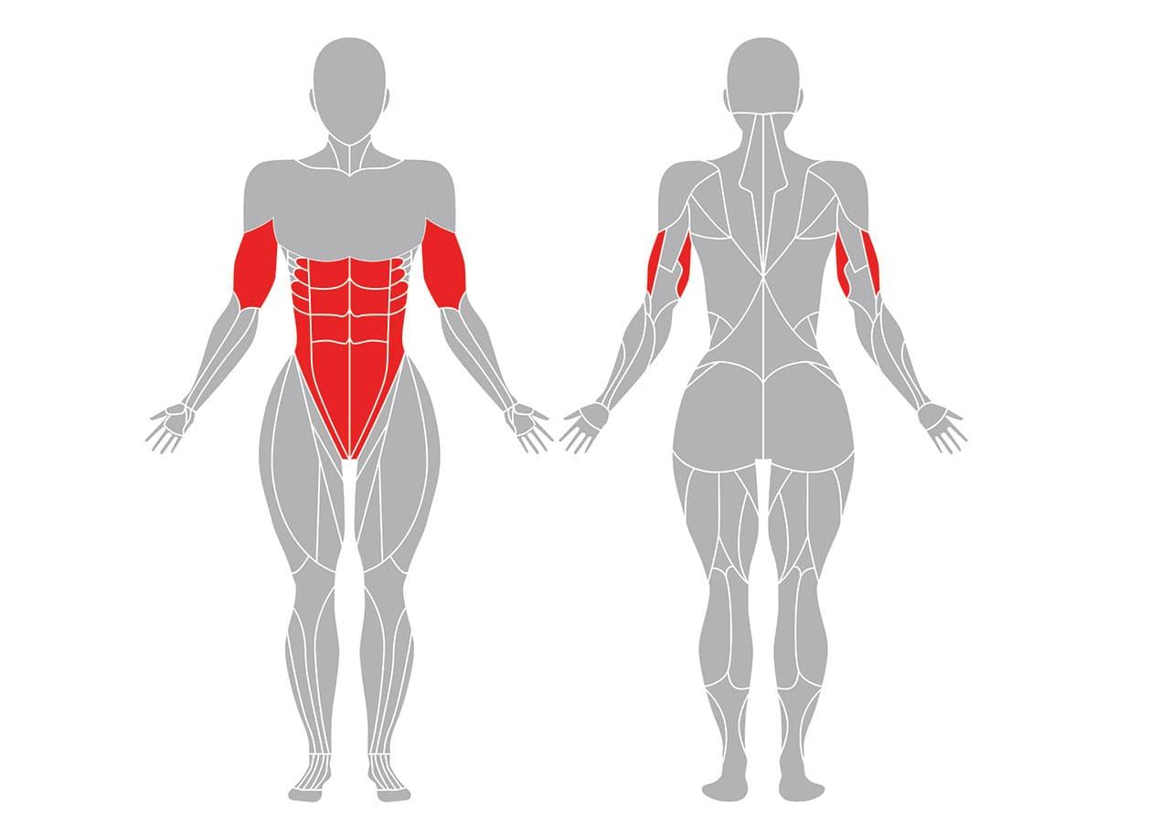 チャトランガダンダーサナで効果的な筋肉部位