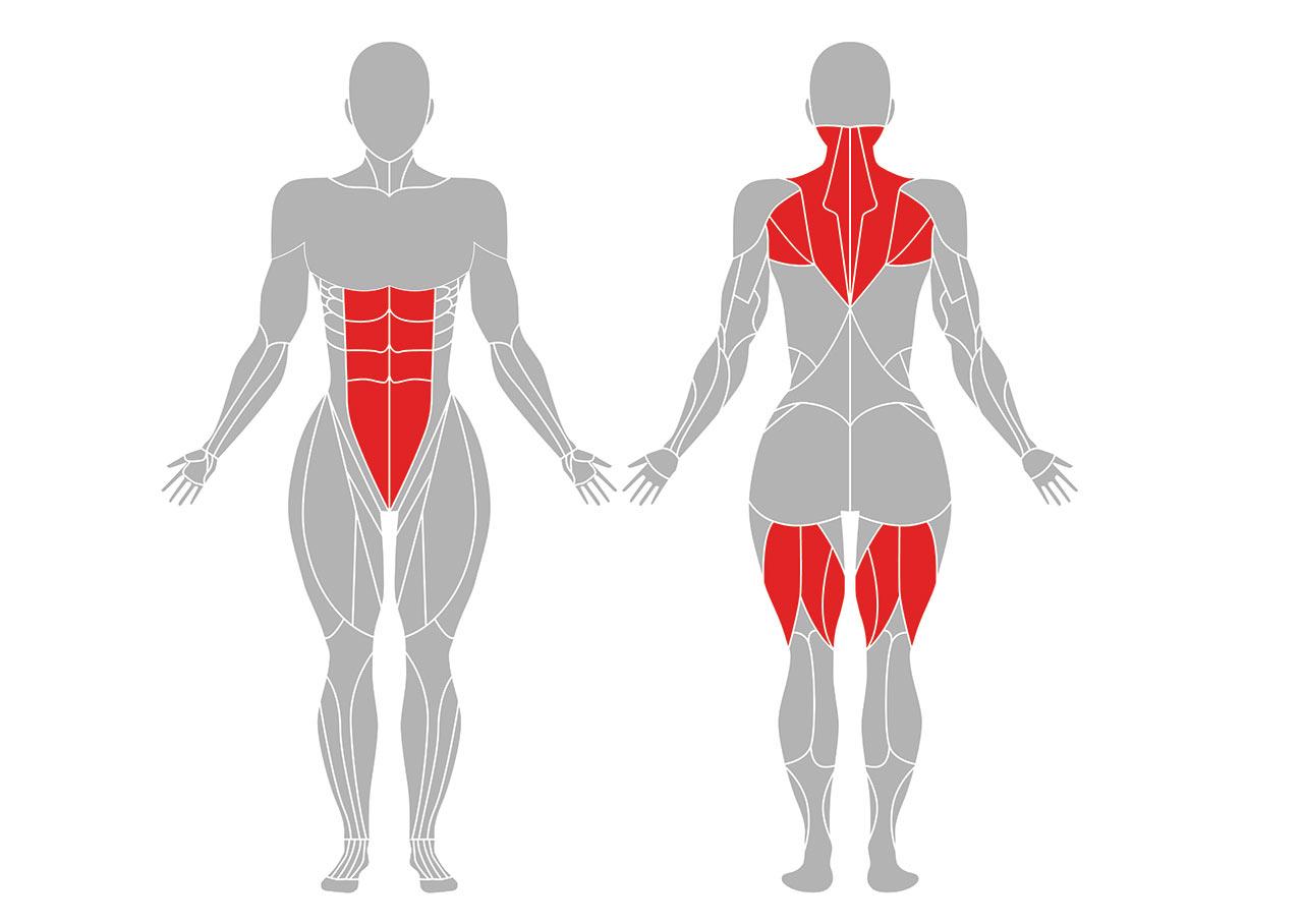 木のポーズの効果が期待できる身体部位