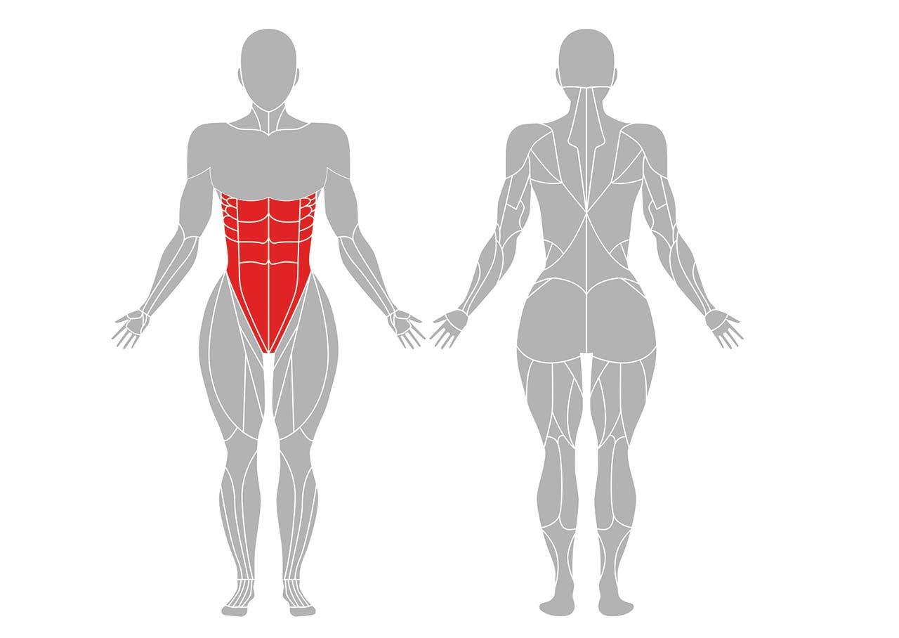 プランクポーズの効果が期待できる筋肉