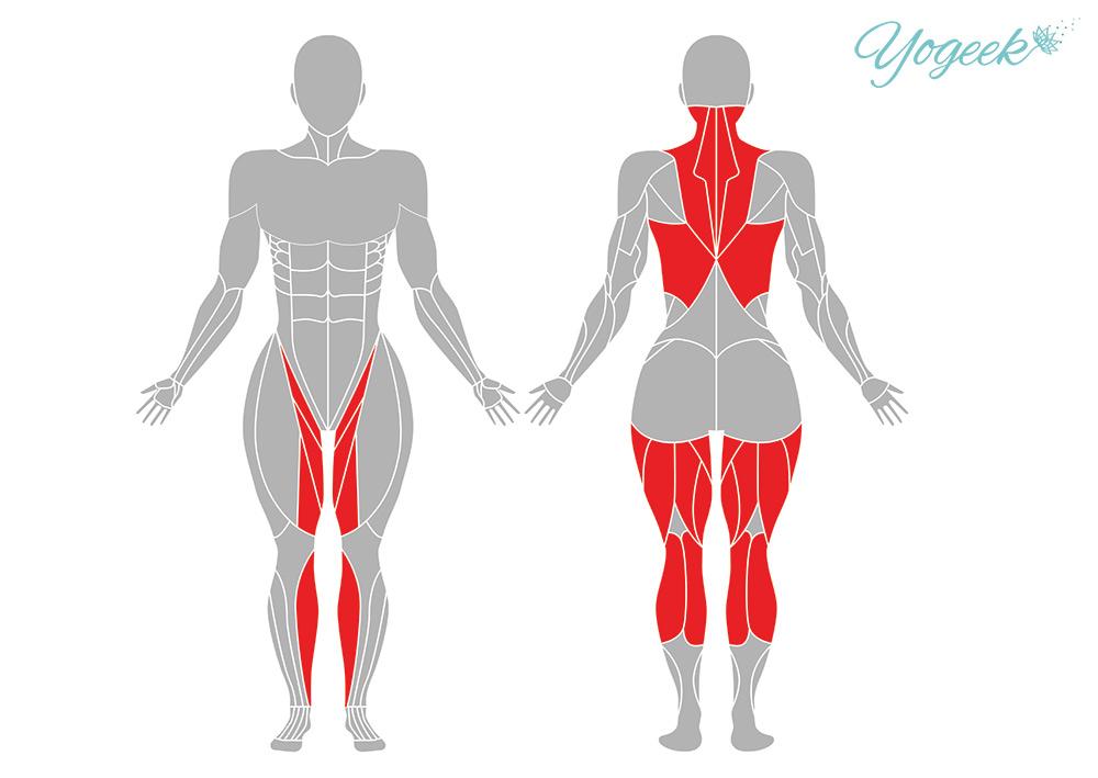 座位の開脚前屈の効果的な身体部位