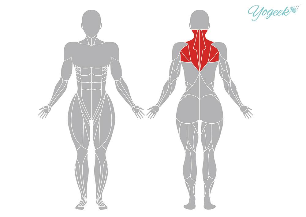 針の糸通しのポーズの効果的な身体部位