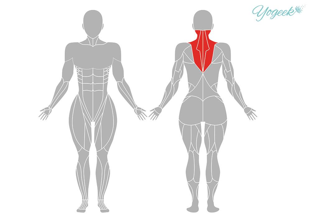 うさぎのポーズの効果的な身体部位