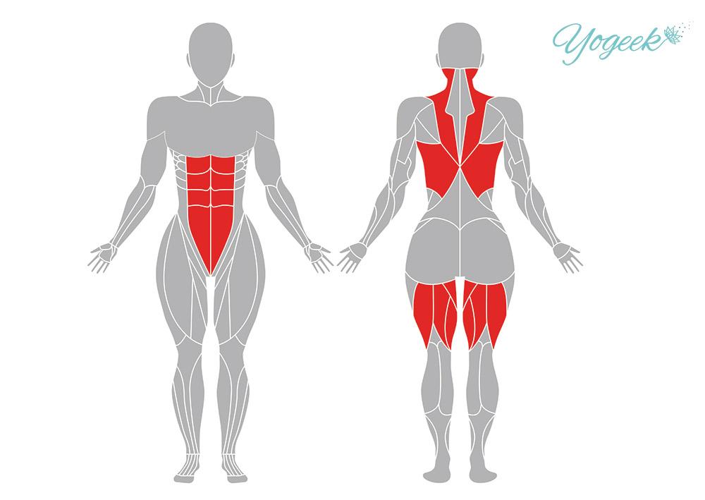 捻った三角のポーズの効果のある部位の解剖図