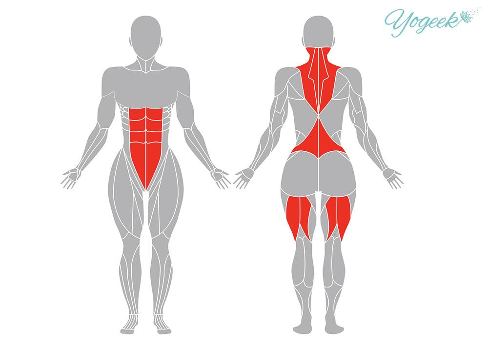 鋤のポーズ(ハーラーサナ)の効果の期待できる筋肉部位