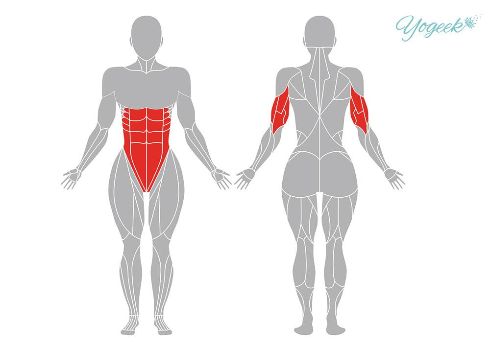 カラスのポーズの効果が期待できる身体部位
