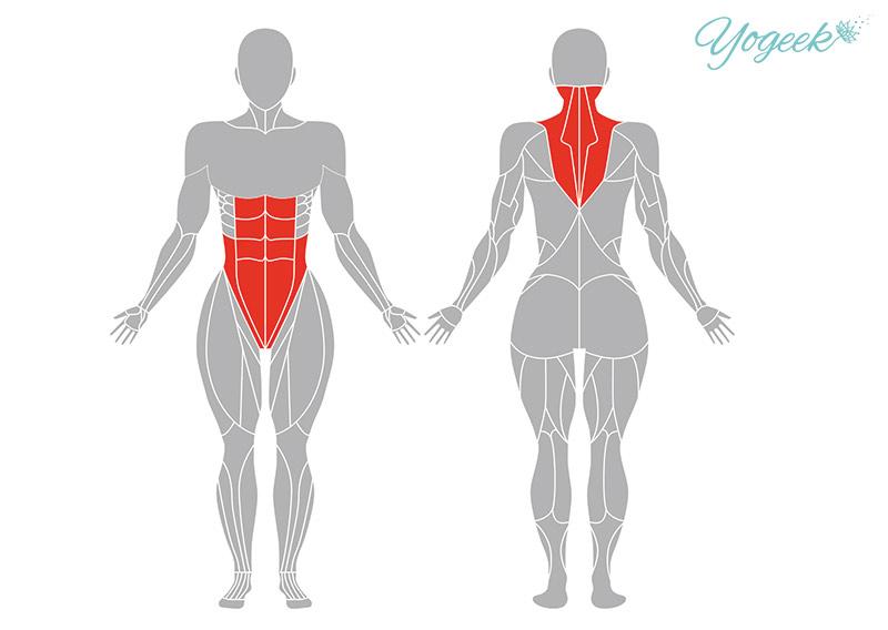 肩立ちのポーズ(ショルダースタンド)の効果が期待できる身体部位