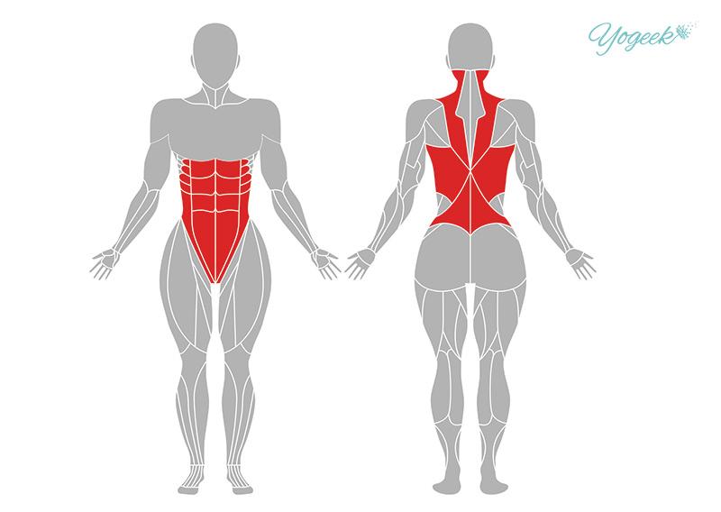 キャットアンドカウの効果の期待できる筋肉部位