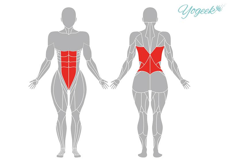 チャイルドポーズの効果の期待できる筋肉部位