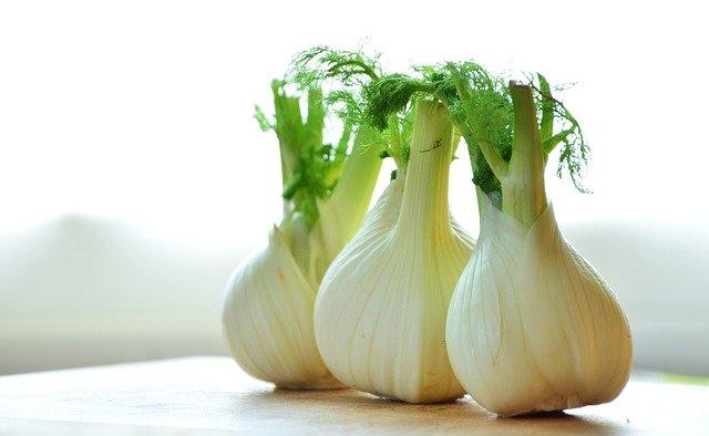 フェンネルの野菜の種類