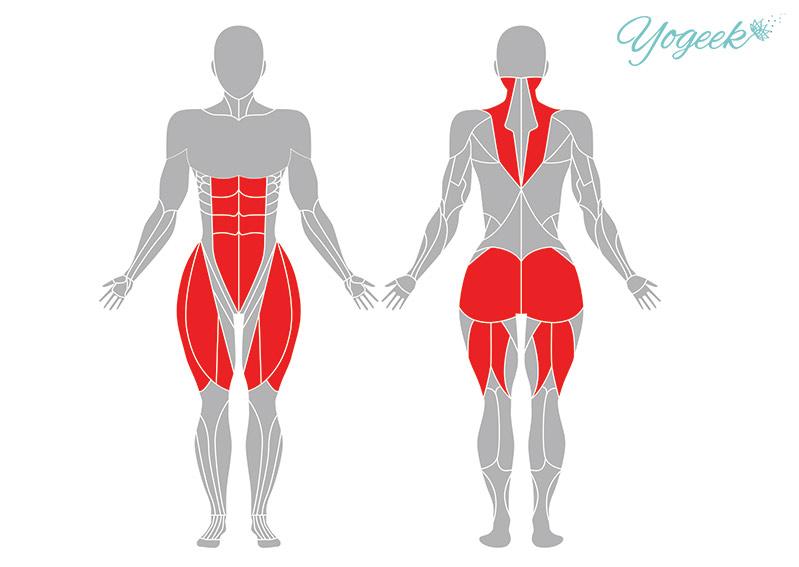 捻った椅子のポーズの効果の期待できる筋肉部位