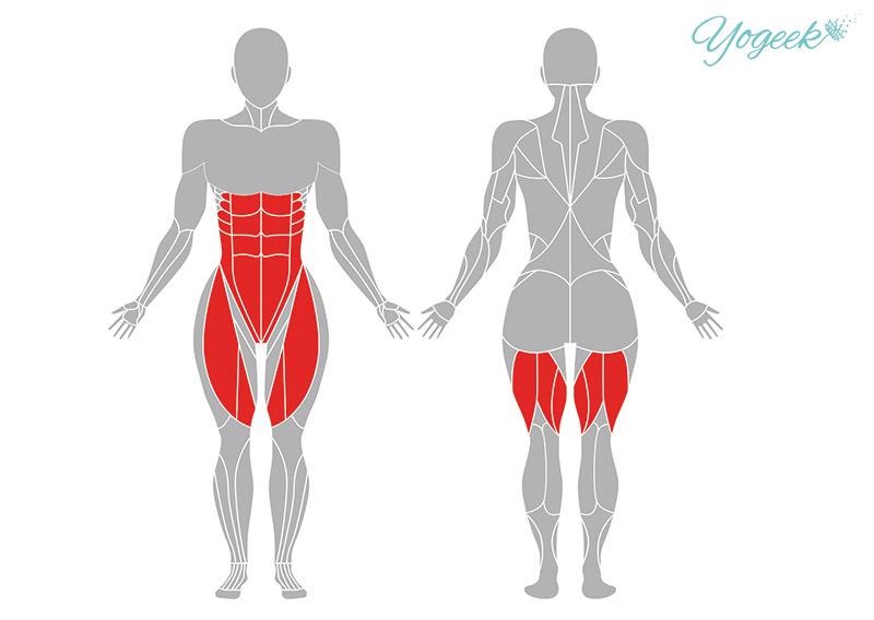 ジャーヌシルシャーサナ(頭を膝につけるポーズ)の効果が期待できる筋肉部位