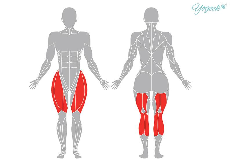 サギのポーズの効果が期待できる筋肉部位