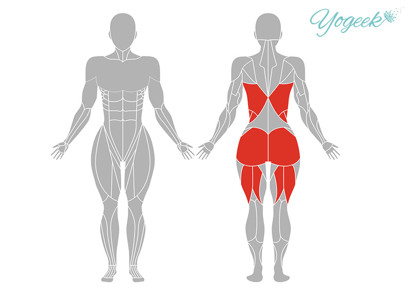 バッタのポーズの効果が期待できる筋肉部位