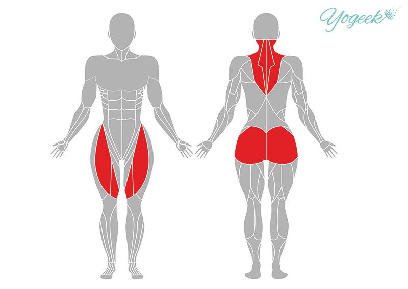 弓のポーズの効果が期待できる筋肉部位