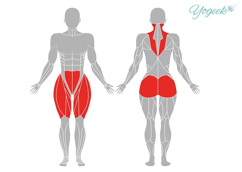 ラクダのポーズの効果が期待できる筋肉部位