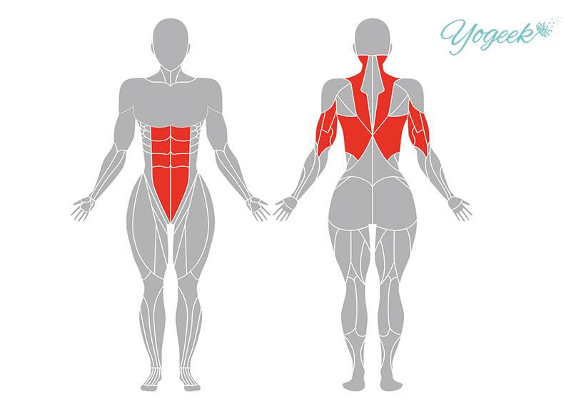 上向き板のポーズの効果が期待できる身体部位