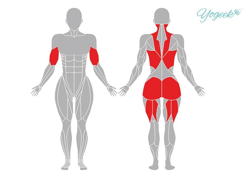 上向き弓のポーズの効果が期待できる身体部位
